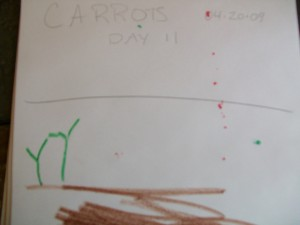 Zander's Drawing of the sprouts