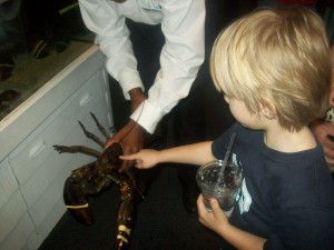 Zander touching a lobster at Red Lobster.
