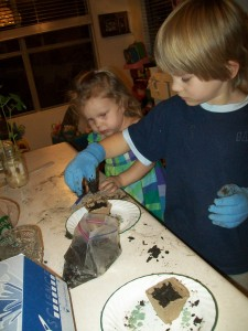 Zander transplanting the bean plants and Lexi helping.